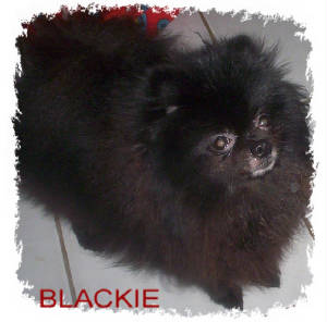 blackie.edged.jpg